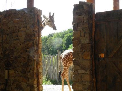 FOTKA - Části žiraf :D