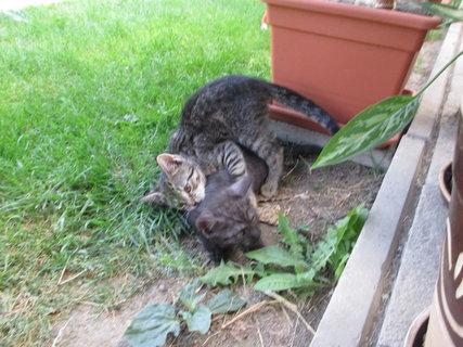 FOTKA - hraní kotěte