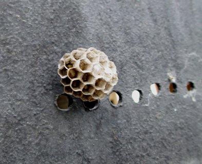 FOTKA - vosí hnízdo