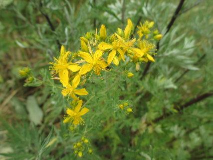 FOTKA - žluté kvítky