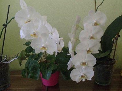 FOTKA - zasa kvitnú