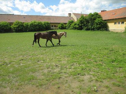 FOTKA - pobíhající koně