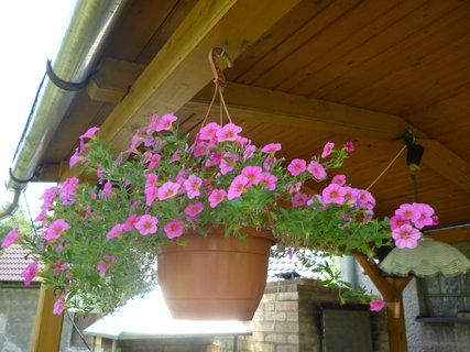 FOTKA - Růžový závěs