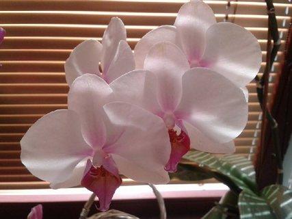 FOTKA - kvitne pri okne