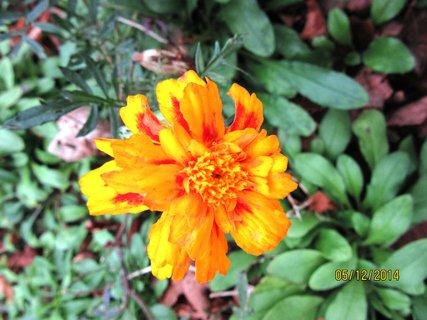 FOTKA - květ,pátého prosince