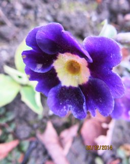 FOTKA - kvetou již měsíc