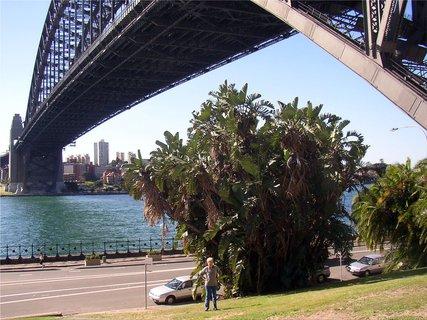 FOTKA - Pod mostem Harbour Bridge
