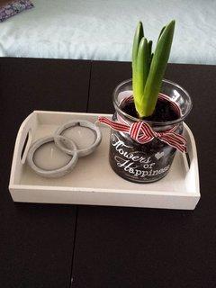 FOTKA - hotovo, hyacint zasazen