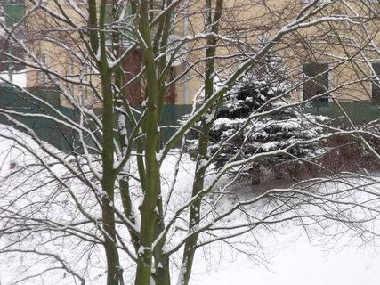 FOTKA - I smrček má bílé větve