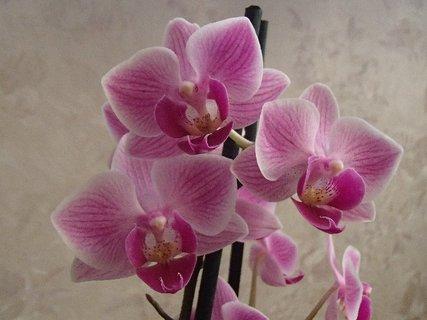 FOTKA - aj orchidea má kvety