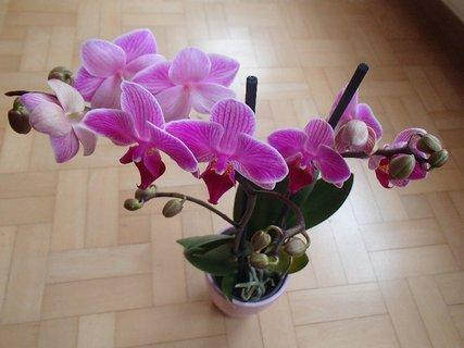FOTKA - moja nová orchidejka