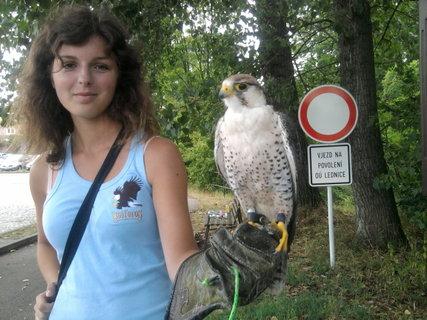 FOTKA - Den v Lednici - děvče s dravcem