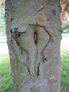 FOTKA - co tim chce strom asi rict