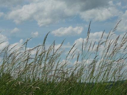 FOTKA - trávy ve větru