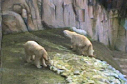 FOTKA - medvídci