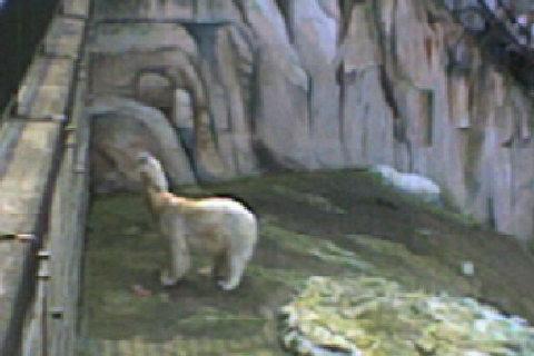 FOTKA - bílý medvídek 2