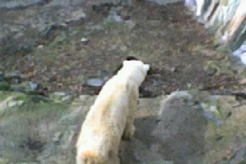 FOTKA - bílý medvídek 4