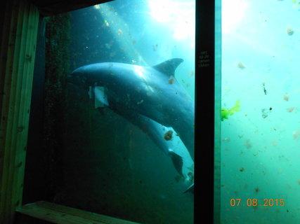 FOTKA - Zvědaví delfíni