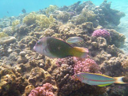 FOTKA - rybičky nad korálem