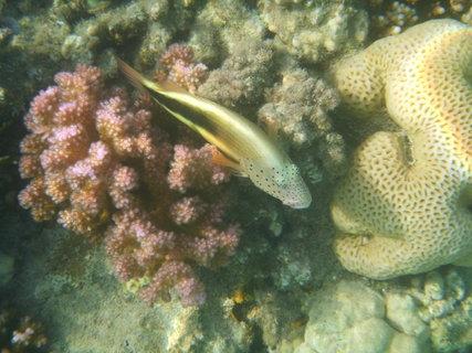 FOTKA - spící rybka