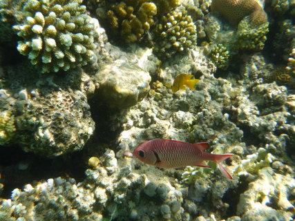 FOTKA - červená rybička