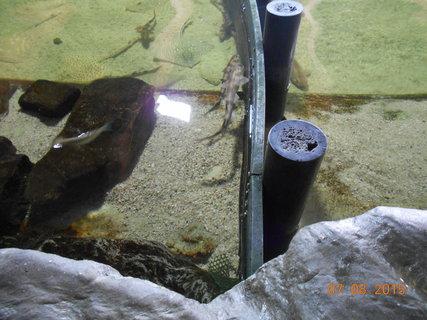 FOTKA - Malé rybičky