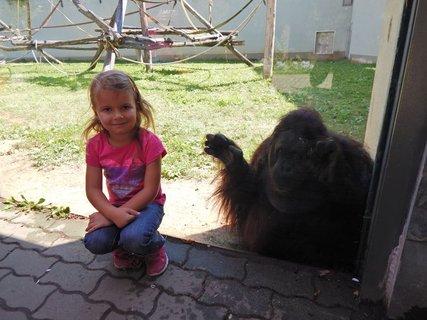 FOTKA - ta opice čumí