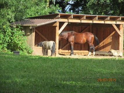 FOTKA - Na koních