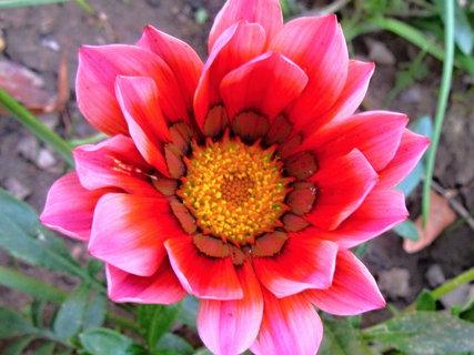 FOTKA - krásně kvetla