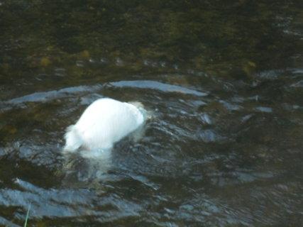 FOTKA - fešák ve vodě