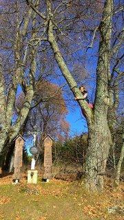 FOTKA - dievčatá radi lezu po stromoch,všade