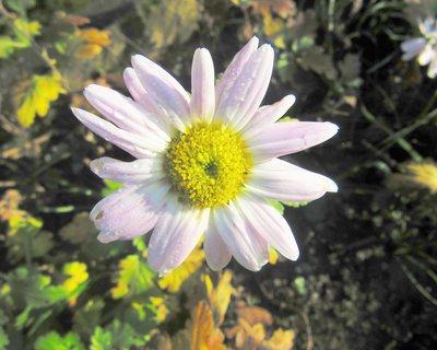 FOTKA - v pros. foceno na zahradě