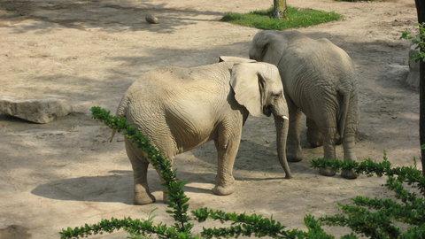 FOTKA - sloni v ZOO lešná