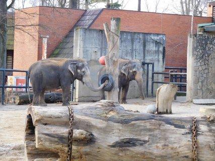 FOTKA - Slon si hraje s pneumatikou