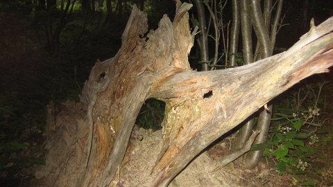 FOTKA - jako v pralese