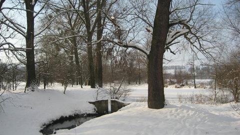 FOTKA - slepé rameno řeky Moravy