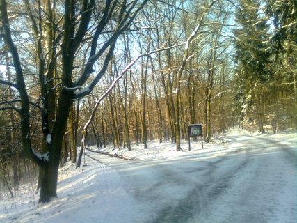 FOTKA - Zima v Krčském lese