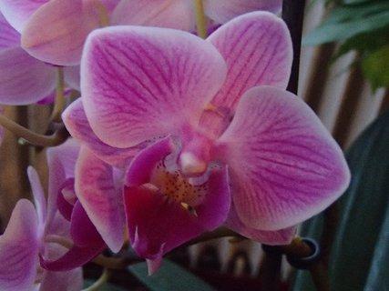 FOTKA - má prúžkaté lupene