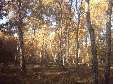 FOTKA - les za závodištěm u Lysé