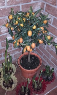 FOTKA - mandarinky