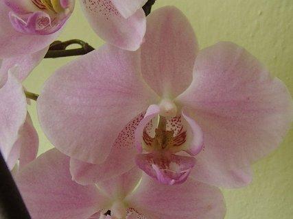 FOTKA - v ružovučkom šate :)