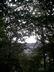 Boskovice za stromy