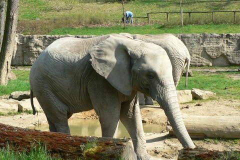 FOTKA - slon