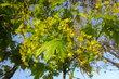 dubnové foto- asi javor
