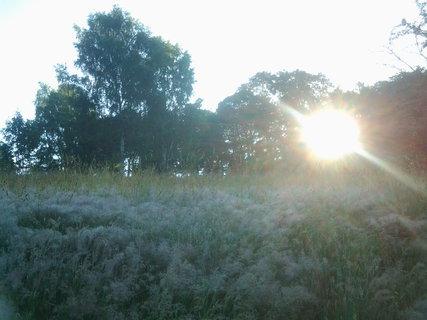 FOTKA - chladné ráno