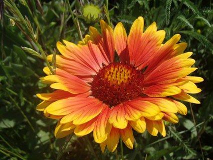 FOTKA - oranžovo žltá kombinácia