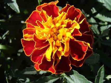 FOTKA - oranžovo žltý