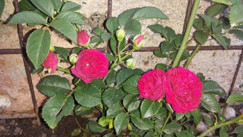 FOTKA - Nový přírustek do mé zahrady
