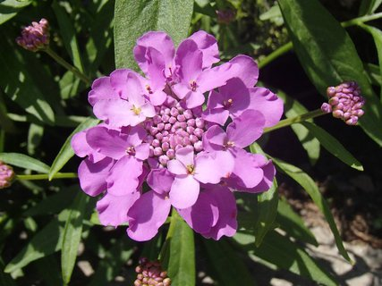 FOTKA - fialový kvietok rozkvitol