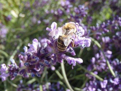 FOTKA - včielka si pochutnáva